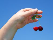 Woman S Hand With Cherries Royalty Free Stock Images