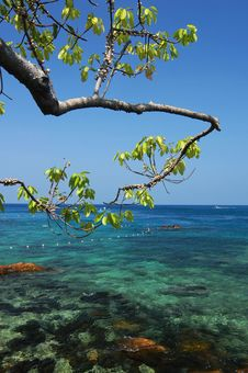Free Tree With Clear Sea Stock Photography - 20015382