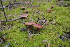 Mushroom Clearing Stock Photography