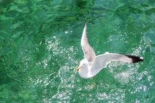 Seagull On The Aegean Sea Royalty Free Stock Photo