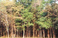 Free Thai Forest Stock Photos - 20018123