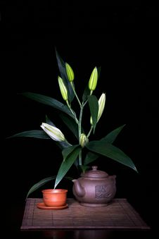 Still-life With Lily Stock Images