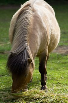 Free Pony Graising Royalty Free Stock Image - 20019726