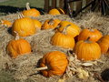 Free PUMPKINS ON HAY Royalty Free Stock Photo - 20023795