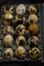 Free Quail Eggs Royalty Free Stock Images - 20024469