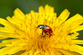 Free Abandon With Ladybug Stock Photos - 20029633