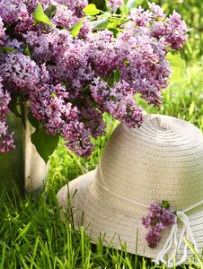 Free Bunch Of Lilac  And Hat Stock Images - 20021394