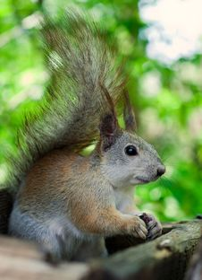 Free Squirrel Eating Seeds Stock Photography - 20021652