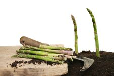 Free Cutting Asparagus Stock Photography - 20021802