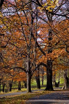 Free Autumn In Park Royalty Free Stock Photography - 20021997