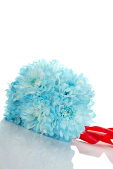 Free Blue Chrysanthemums Stock Image - 20022341