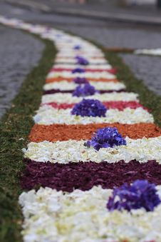 Free Flower Rug Stock Image - 20022801