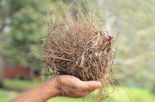 Free Bird Nest Stock Photos - 20024263