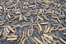 Free Dried Sea Cucumbers Royalty Free Stock Photography - 20024267