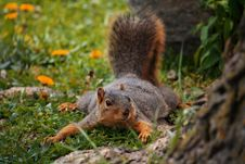 Free Squirrel Playing Royalty Free Stock Photography - 20025947