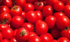 Free Multitude Of Tomatoes Stock Photo - 20027040