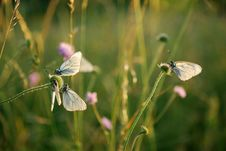 Free Butterfly Stock Image - 20027311