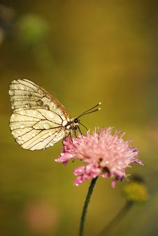 Free Butterfly Stock Photos - 20027403