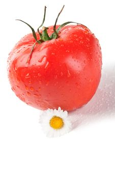 Free Fresh Tomato And Flowers Stock Image - 20027731
