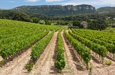 Free Vineyard Near Cassis Royalty Free Stock Photo - 20027905