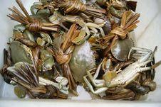 Sea Crab Royalty Free Stock Photography