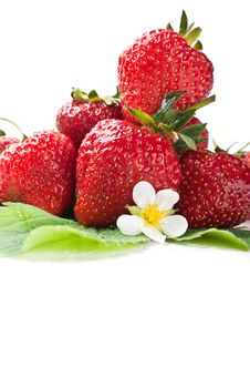 Free Fresh Strawberry On A Green Leaf Royalty Free Stock Images - 20028339