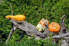 Free Pumpkins Royalty Free Stock Photography - 20029347