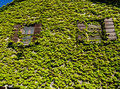 Free Wall Of Leaves Stock Images - 20030314