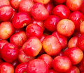 Free Sweet Cherry Royalty Free Stock Images - 20032859