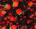 Free Berry Royalty Free Stock Photos - 20034018