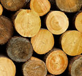 Free Wood Logs Background Royalty Free Stock Photography - 20036357