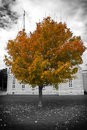 Free Autumn Tree And Church Stock Images - 20036524
