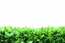 Free Leaves Layer Royalty Free Stock Photo - 20030985