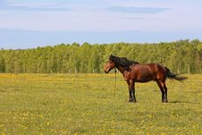 Free The Beautiful Horse Is Grazed On A Green Meadow Stock Photos - 20031153