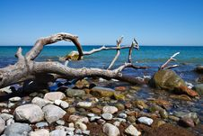 Free On Shore Stock Photography - 20031702