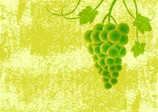 Free Grape On Green Background Stock Images - 20032124