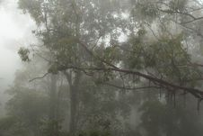 Free Foggy And Mystical Forest Stock Photos - 20032953
