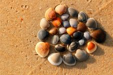 Free Colorful Shells Stock Photography - 20033312