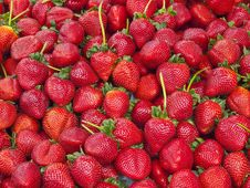 Free Strawberry Reunion Royalty Free Stock Images - 20034119