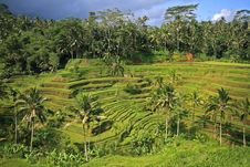 Free Rice Terraces Stock Photos - 20037723