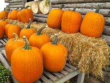 Free Pumpkins Royalty Free Stock Photos - 20037958
