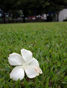Free Flower On Grass Stock Photos - 20038293