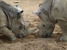 Free Rhino Stock Photos - 20038833