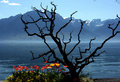 Free Swiss Riviera, Montreux Royalty Free Stock Photography - 20047147