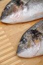 Free Fresh Fish Stock Images - 20047364