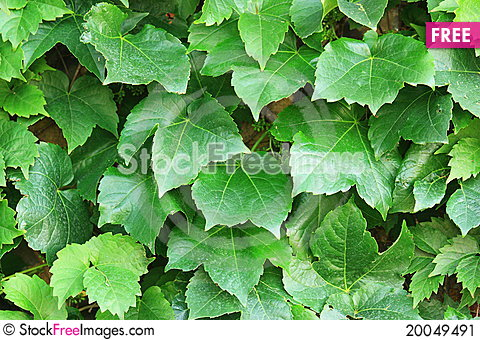 Abstract green leafs background Stock Photo