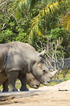 Free Rhino Stock Photography - 20040652