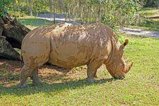 Free Rhino Stock Image - 20041131