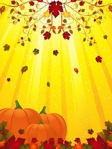 Free Autmn Flourish And Pumpkins Royalty Free Stock Photos - 20041678