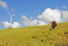 Free Clean Energy Royalty Free Stock Photography - 20042067